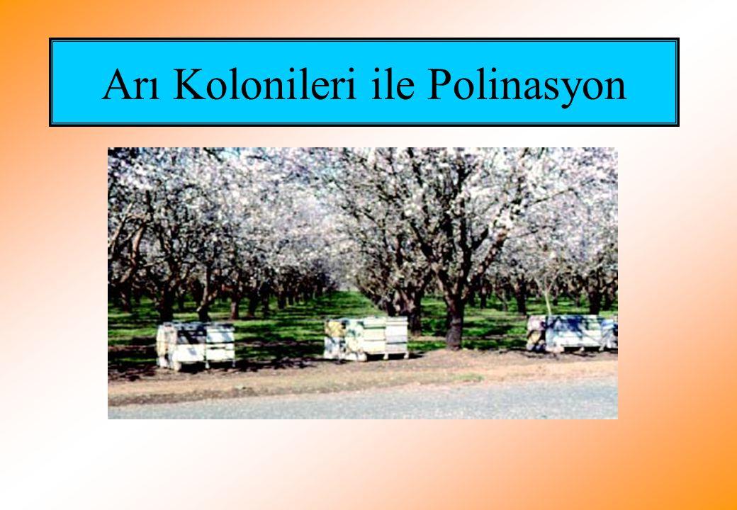 Arı Kolonileri ile Polinasyon
