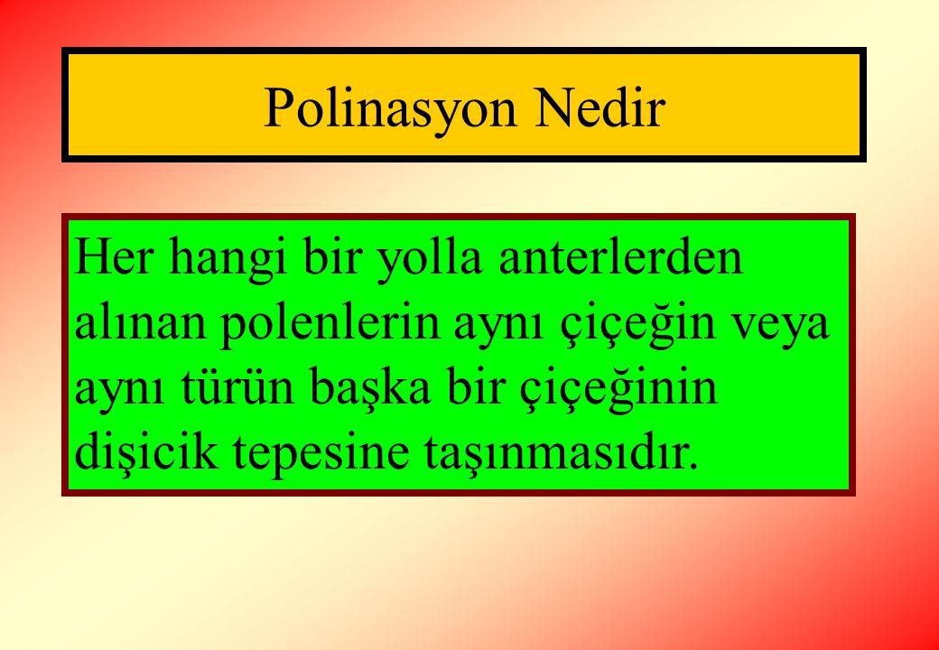 Polinasyon Nedir Her hangi bir yolla anterlerden alınan polenlerin aynı çiçeğin veya aynı türün başka bir çiçeğinin dişicik tepesine taşınmasıdır.