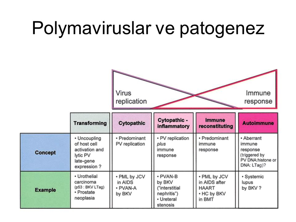 Polymaviruslar ve patogenez
