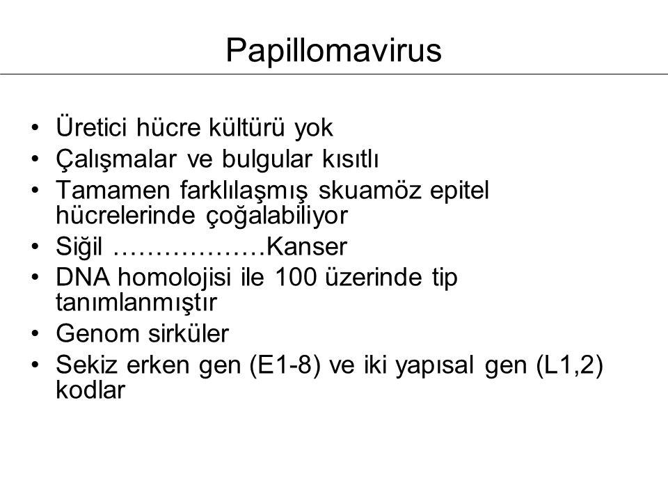 Papillomavirus Üretici hücre kültürü yok