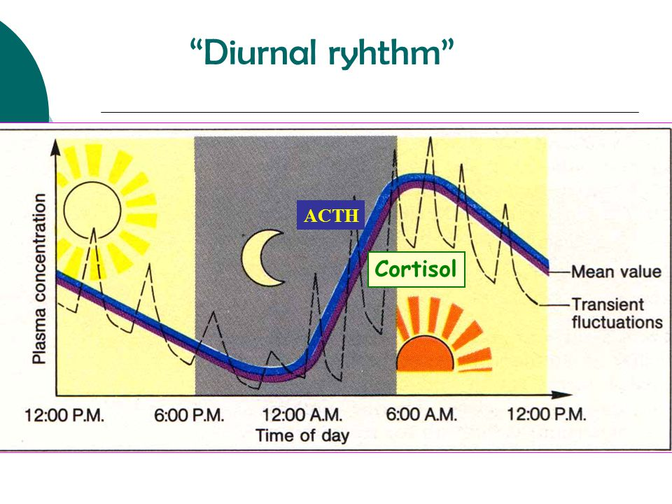 Diurnal ryhthm ACTH Cortisol