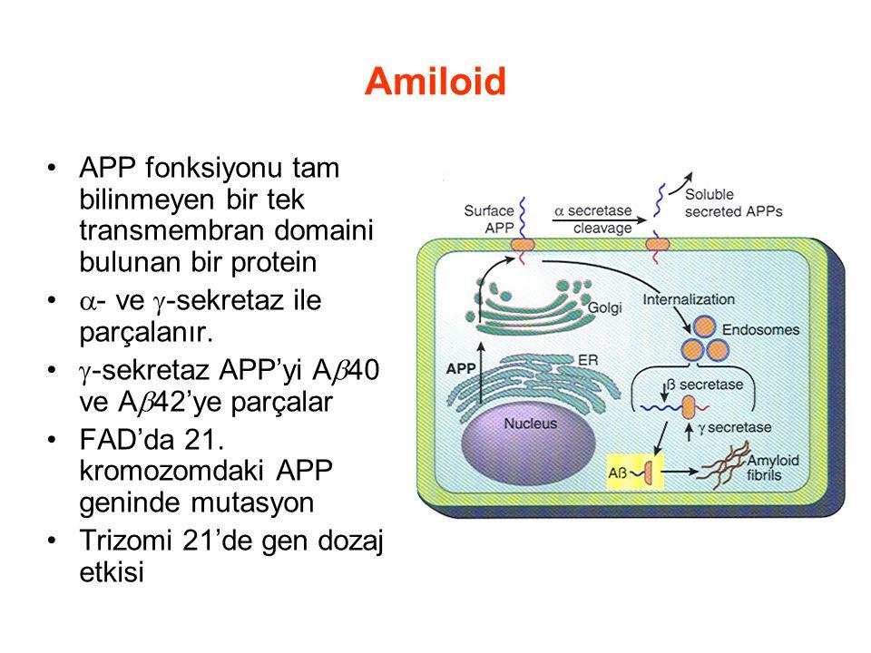 Amiloid APP fonksiyonu tam bilinmeyen bir tek transmembran domaini bulunan bir protein. - ve -sekretaz ile parçalanır.