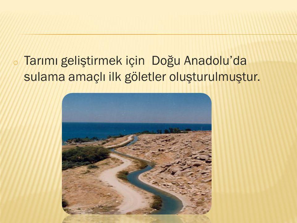 Tarımı geliştirmek için Doğu Anadolu'da sulama amaçlı ilk göletler oluşturulmuştur.