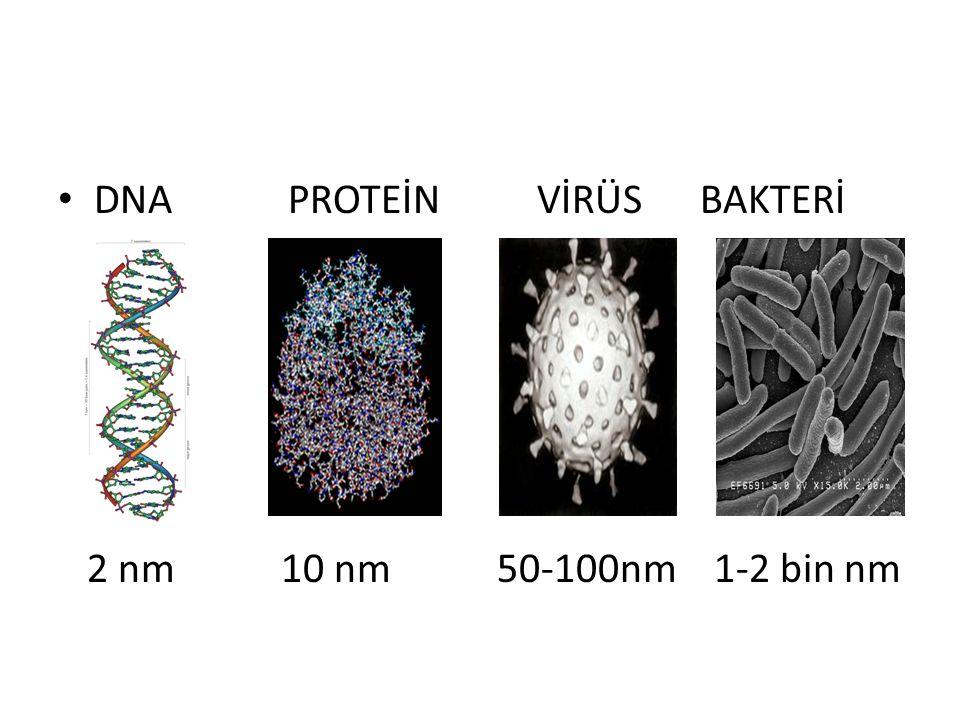 DNA PROTEİN VİRÜS BAKTERİ