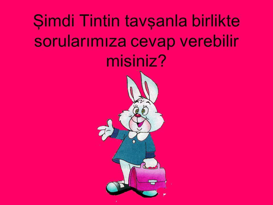 Şimdi Tintin tavşanla birlikte sorularımıza cevap verebilir misiniz