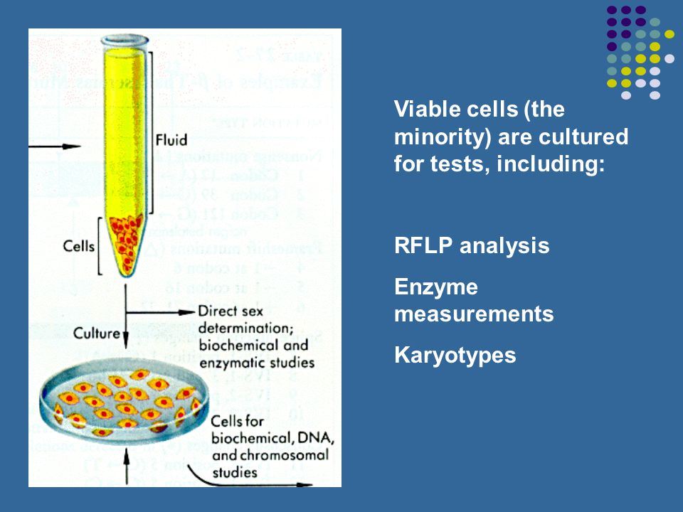 Viable cells (the minority) are cultured for tests, including: