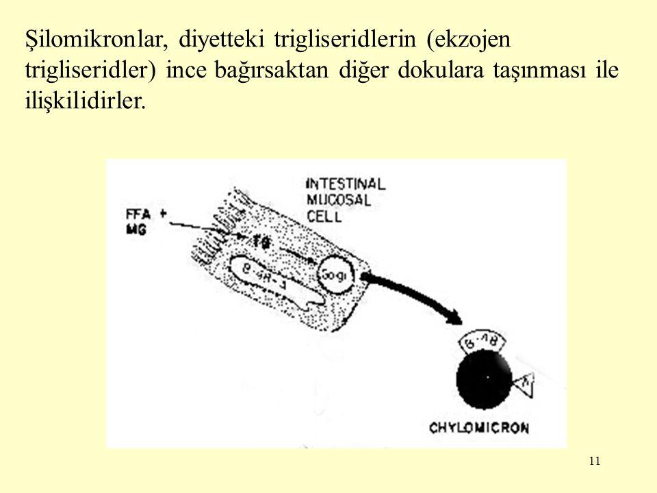 Şilomikronlar, diyetteki trigliseridlerin (ekzojen trigliseridler) ince bağırsaktan diğer dokulara taşınması ile ilişkilidirler.