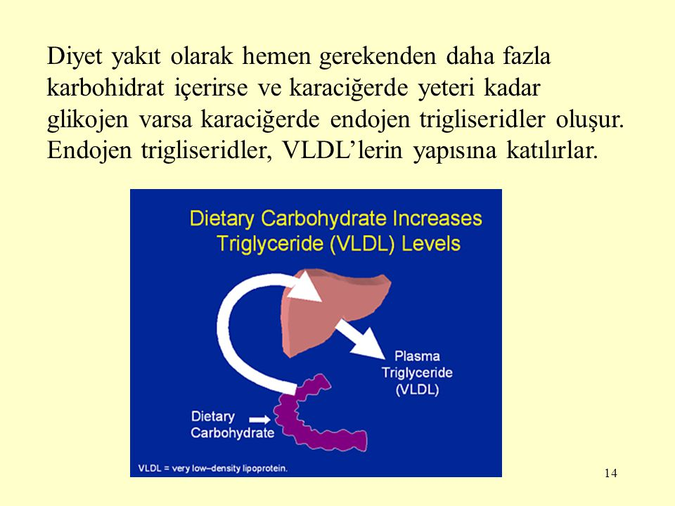 Diyet yakıt olarak hemen gerekenden daha fazla karbohidrat içerirse ve karaciğerde yeteri kadar glikojen varsa karaciğerde endojen trigliseridler oluşur.