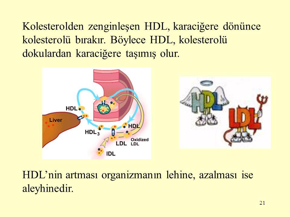 Kolesterolden zenginleşen HDL, karaciğere dönünce kolesterolü bırakır