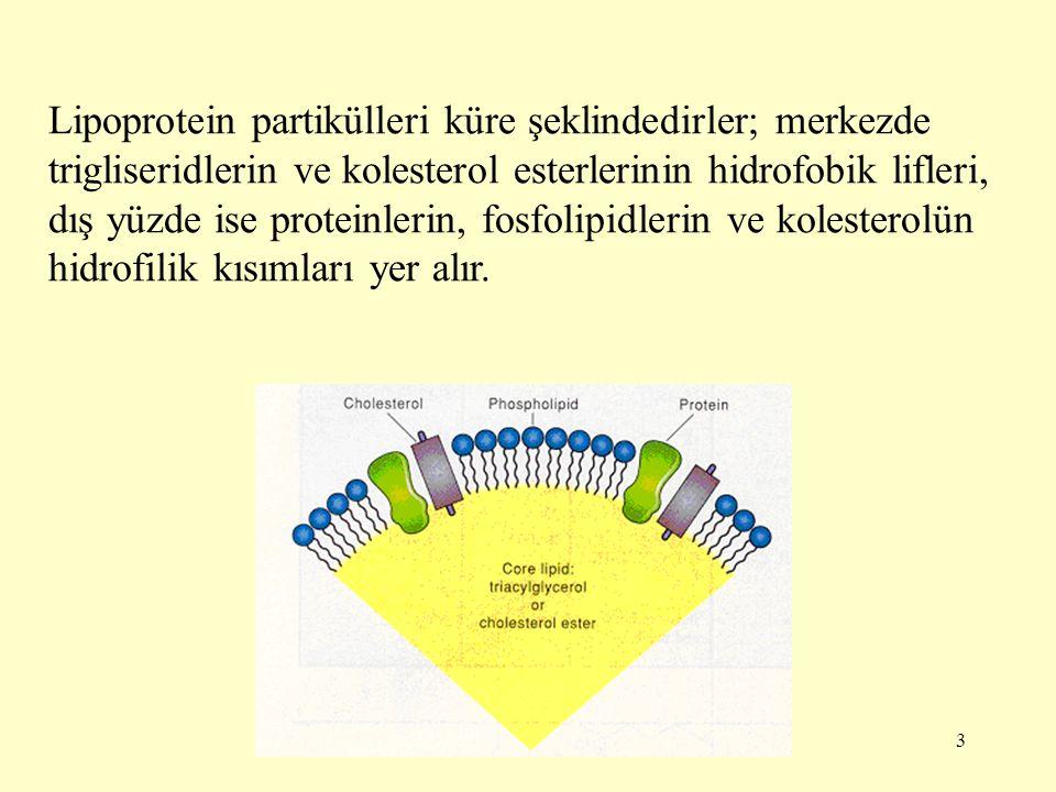 Lipoprotein partikülleri küre şeklindedirler; merkezde trigliseridlerin ve kolesterol esterlerinin hidrofobik lifleri, dış yüzde ise proteinlerin, fosfolipidlerin ve kolesterolün hidrofilik kısımları yer alır.
