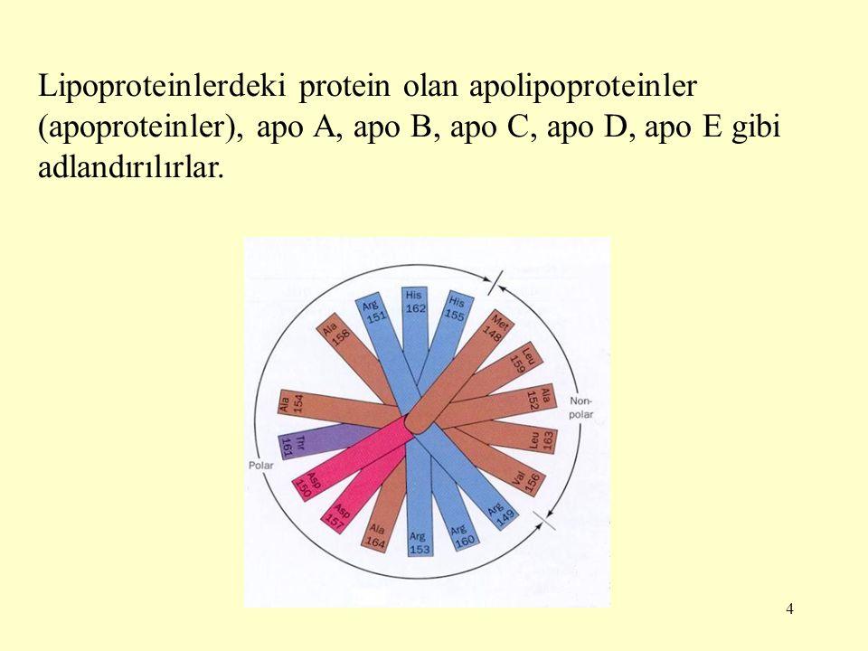 Lipoproteinlerdeki protein olan apolipoproteinler (apoproteinler), apo A, apo B, apo C, apo D, apo E gibi adlandırılırlar.