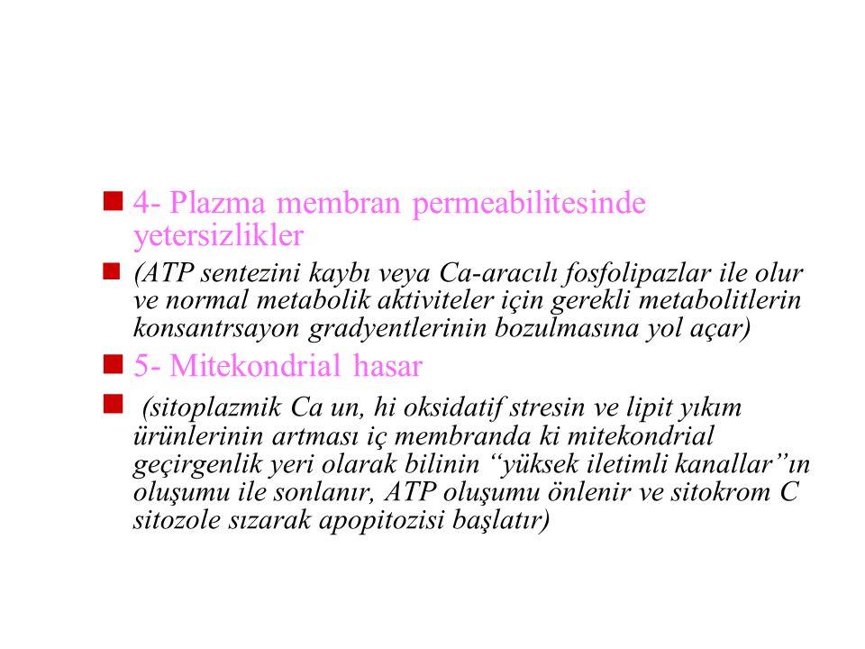 4- Plazma membran permeabilitesinde yetersizlikler