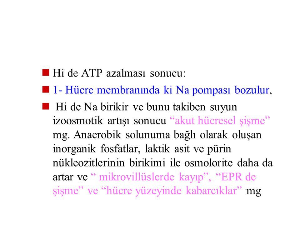 Hi de ATP azalması sonucu: