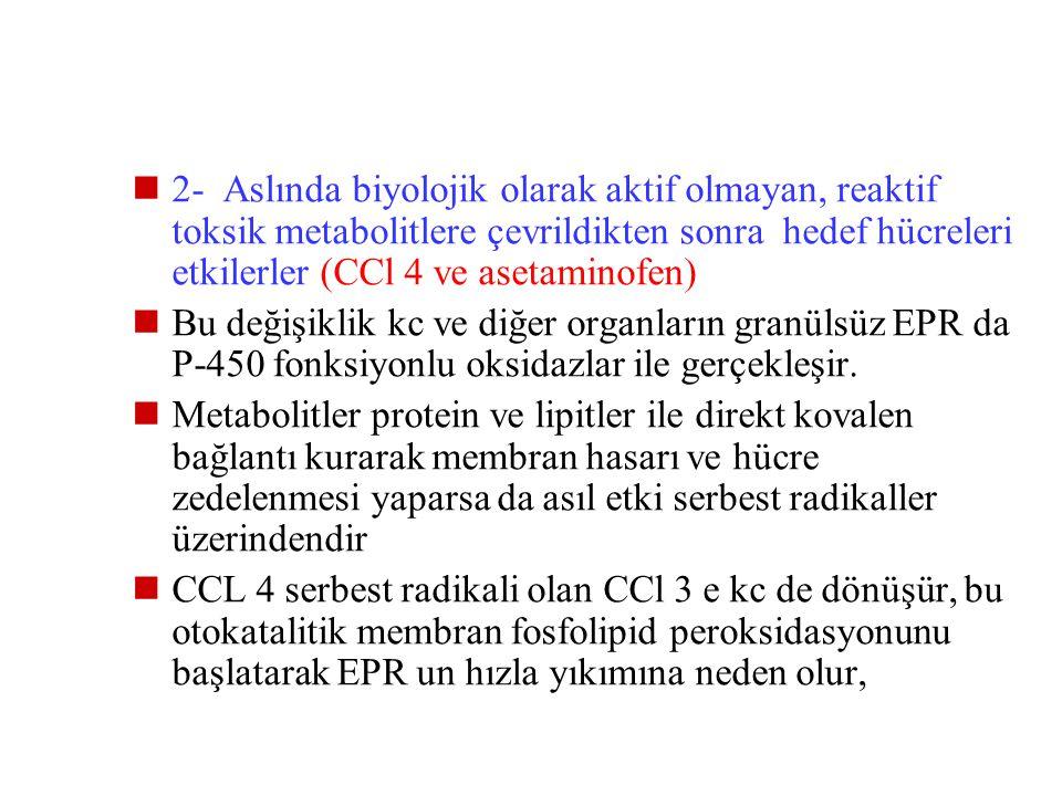 2- Aslında biyolojik olarak aktif olmayan, reaktif toksik metabolitlere çevrildikten sonra hedef hücreleri etkilerler (CCl 4 ve asetaminofen)