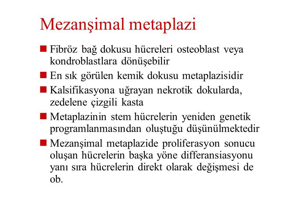 Mezanşimal metaplazi Fibröz bağ dokusu hücreleri osteoblast veya kondroblastlara dönüşebilir. En sık görülen kemik dokusu metaplazisidir.