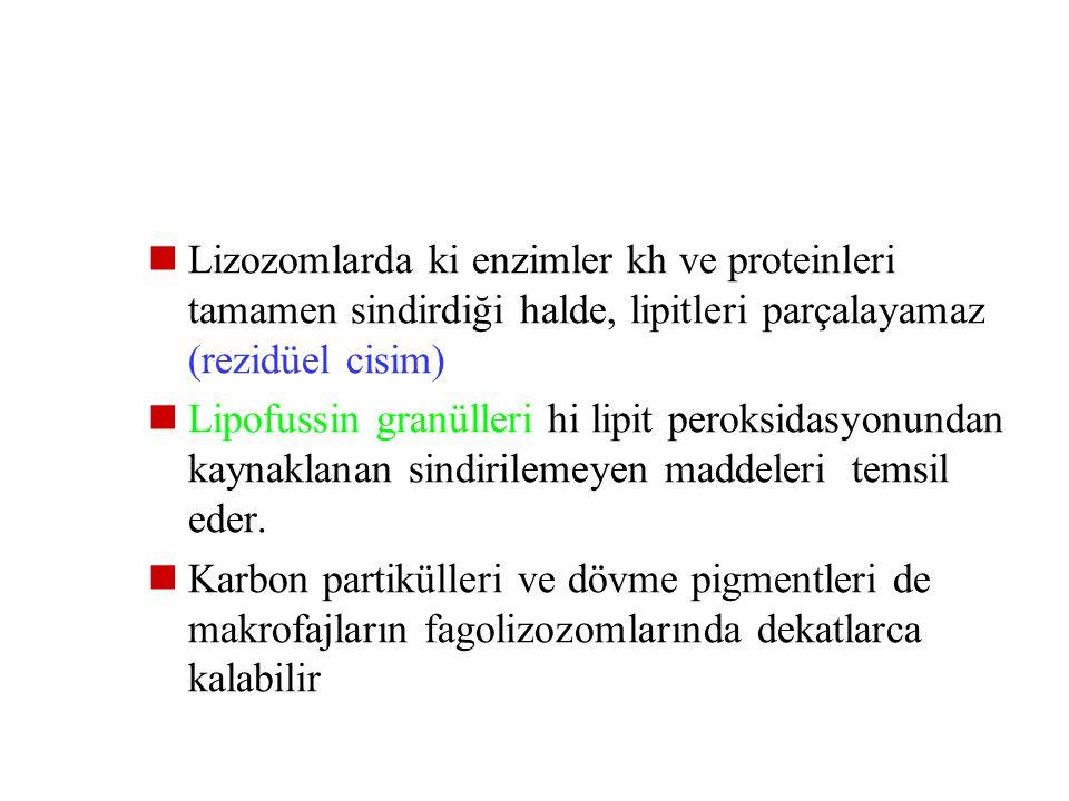 Lizozomlarda ki enzimler kh ve proteinleri tamamen sindirdiği halde, lipitleri parçalayamaz (rezidüel cisim)