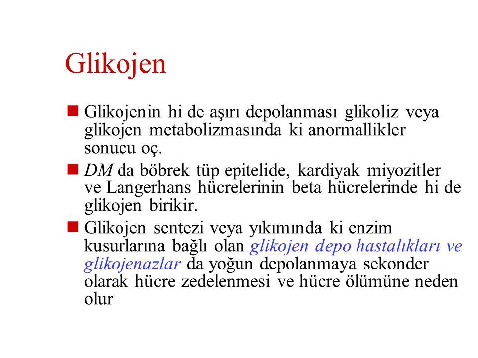 Glikojen Glikojenin hi de aşırı depolanması glikoliz veya glikojen metabolizmasında ki anormallikler sonucu oç.