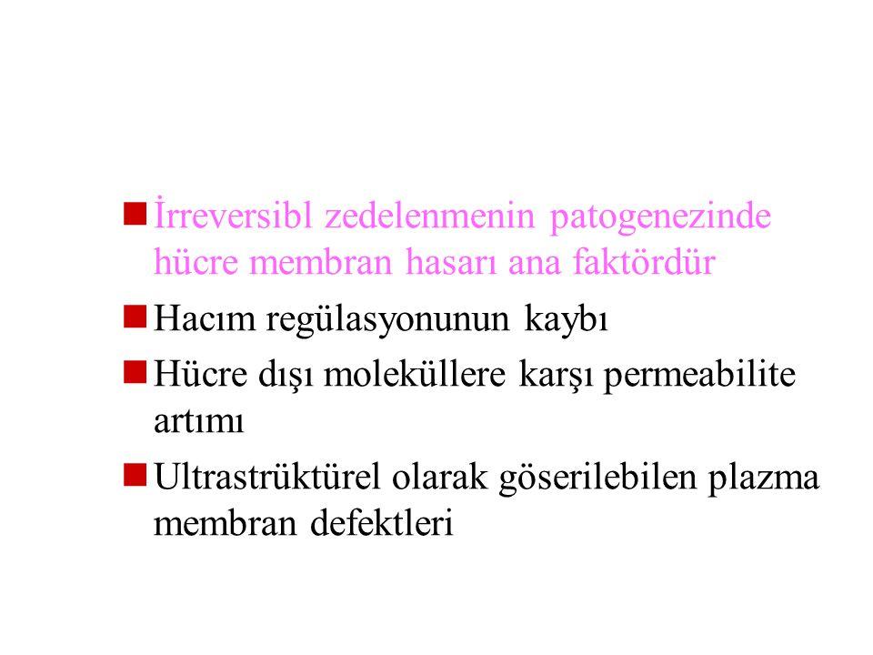 İrreversibl zedelenmenin patogenezinde hücre membran hasarı ana faktördür