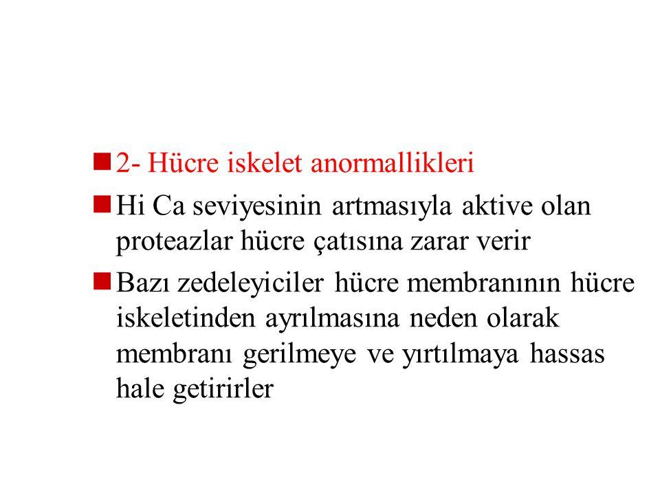 2- Hücre iskelet anormallikleri