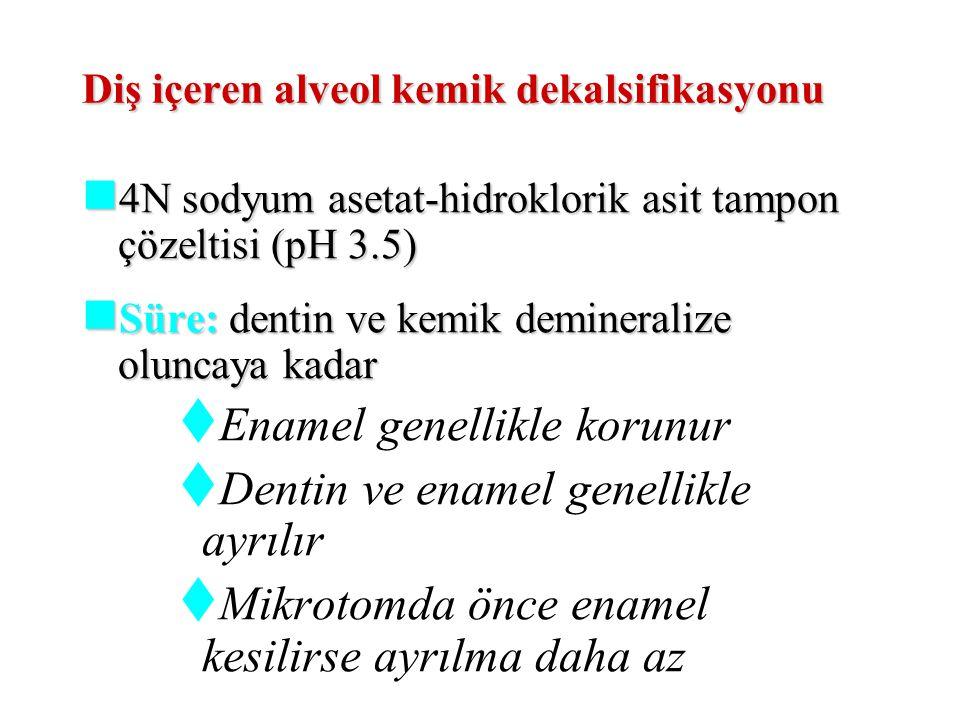Diş içeren alveol kemik dekalsifikasyonu