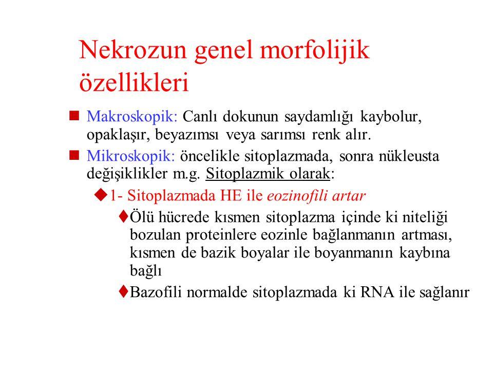 Nekrozun genel morfolijik özellikleri