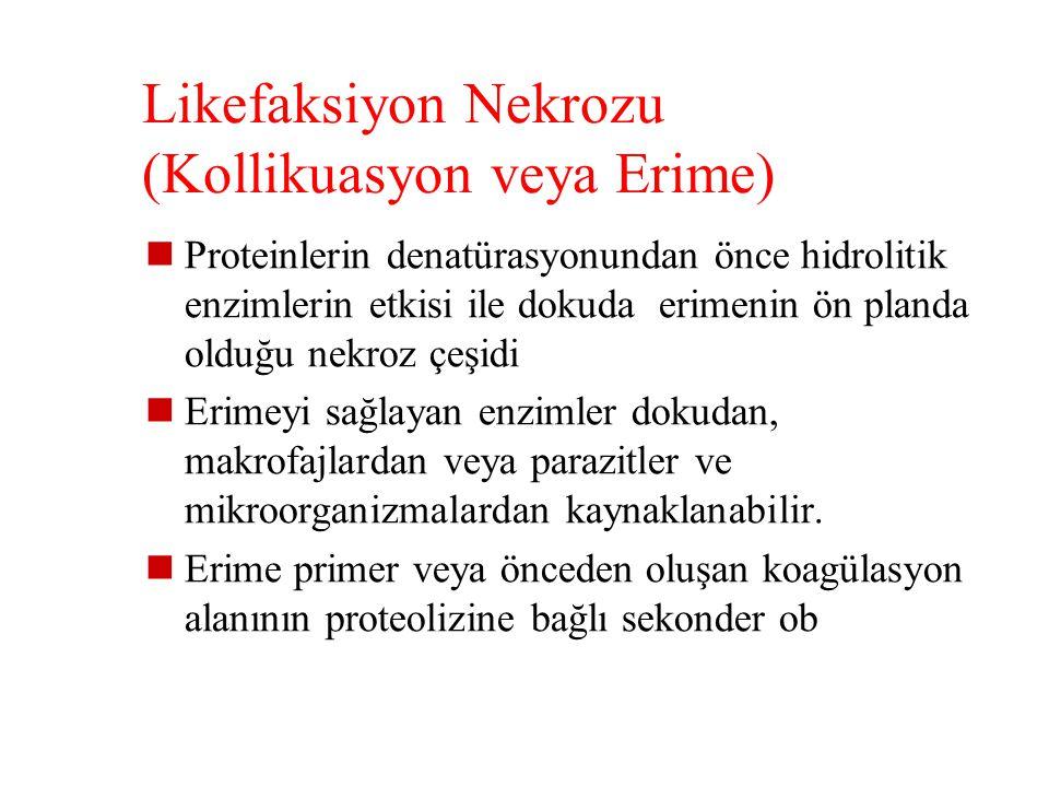 Likefaksiyon Nekrozu (Kollikuasyon veya Erime)