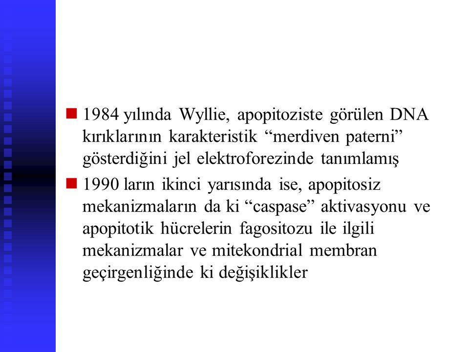 1984 yılında Wyllie, apopitoziste görülen DNA kırıklarının karakteristik merdiven paterni gösterdiğini jel elektroforezinde tanımlamış