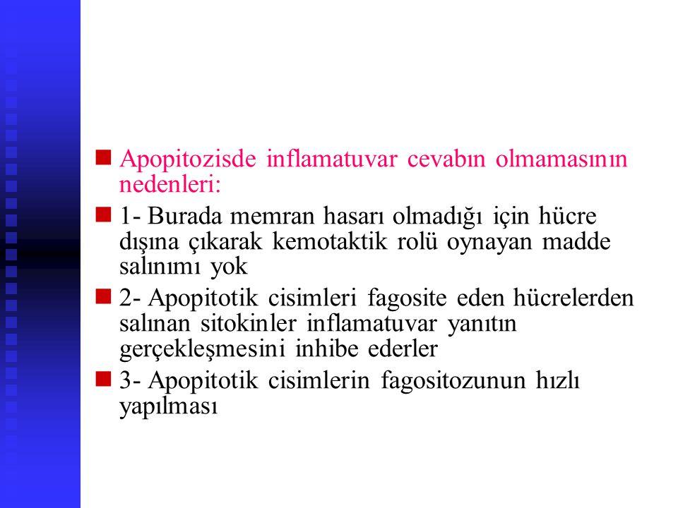 Apopitozisde inflamatuvar cevabın olmamasının nedenleri: