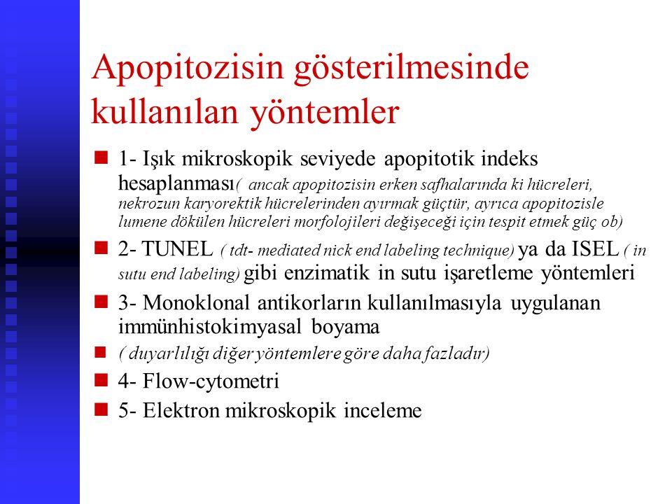 Apopitozisin gösterilmesinde kullanılan yöntemler