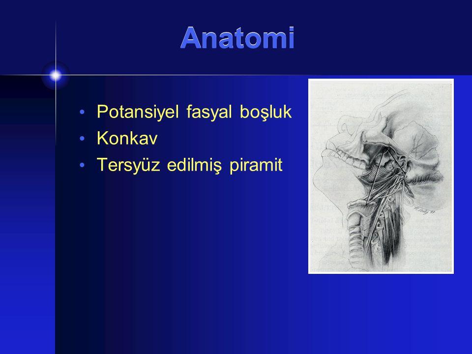 Anatomi Potansiyel fasyal boşluk Konkav Tersyüz edilmiş piramit