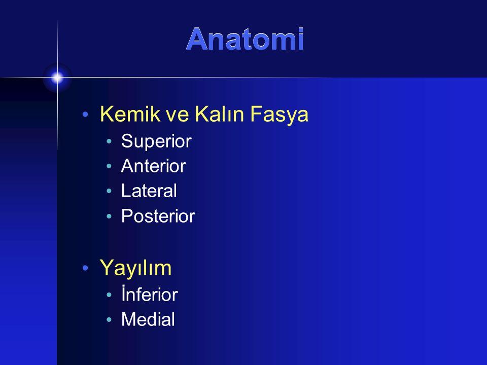 Anatomi Kemik ve Kalın Fasya Yayılım Superior Anterior Lateral