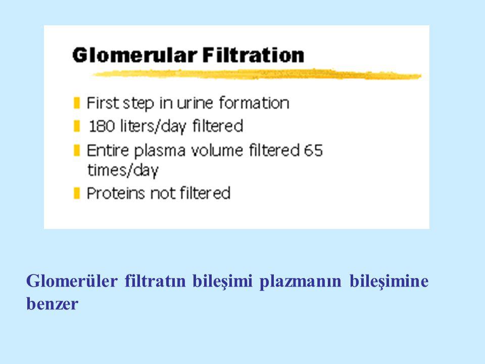 Glomerüler filtratın bileşimi plazmanın bileşimine benzer