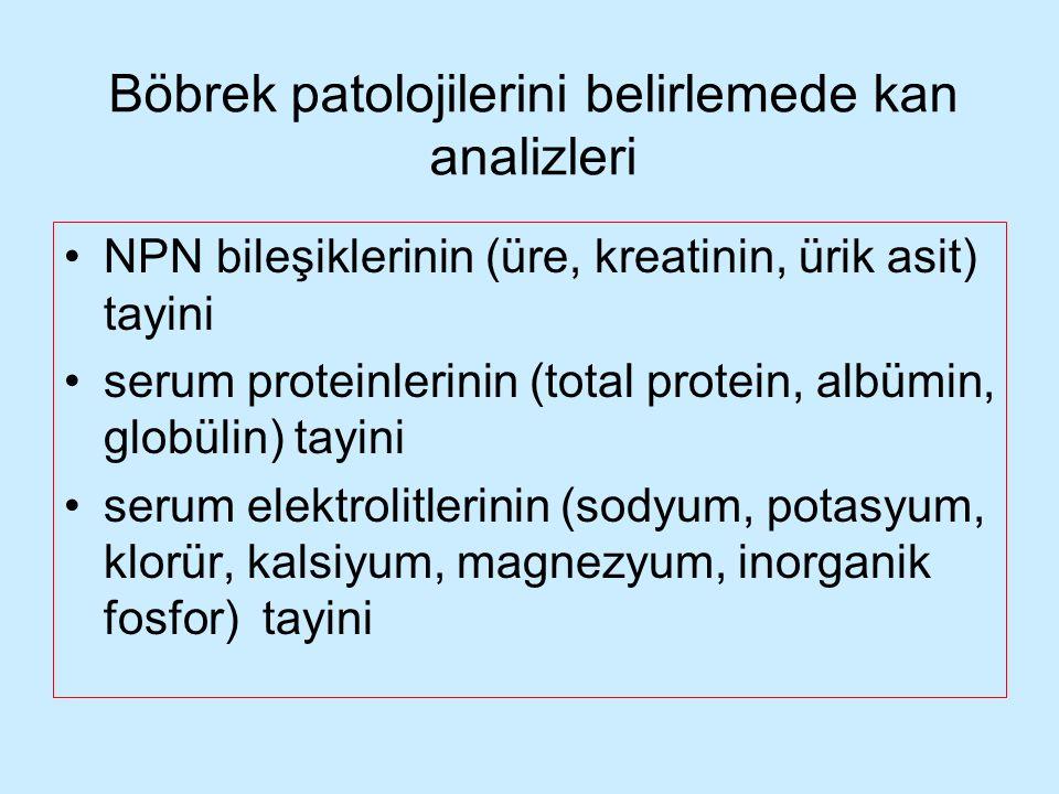 Böbrek patolojilerini belirlemede kan analizleri