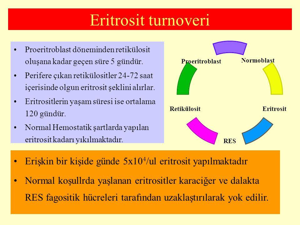 Eritrosit turnoveri Proeritroblast döneminden retikülosit oluşana kadar geçen süre 5 gündür.