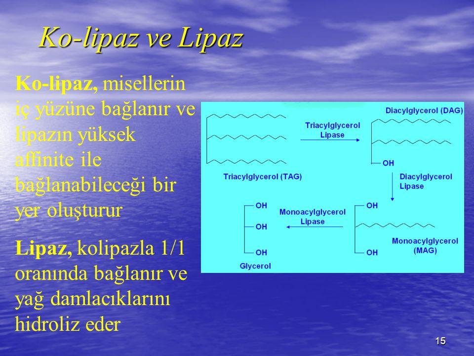 Ko-lipaz ve Lipaz Ko-lipaz, misellerin iç yüzüne bağlanır ve lipazın yüksek affinite ile bağlanabileceği bir yer oluşturur.