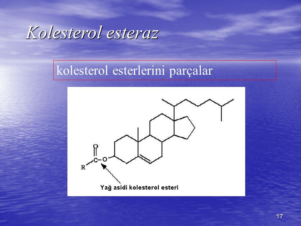 Kolesterol esteraz kolesterol esterlerini parçalar