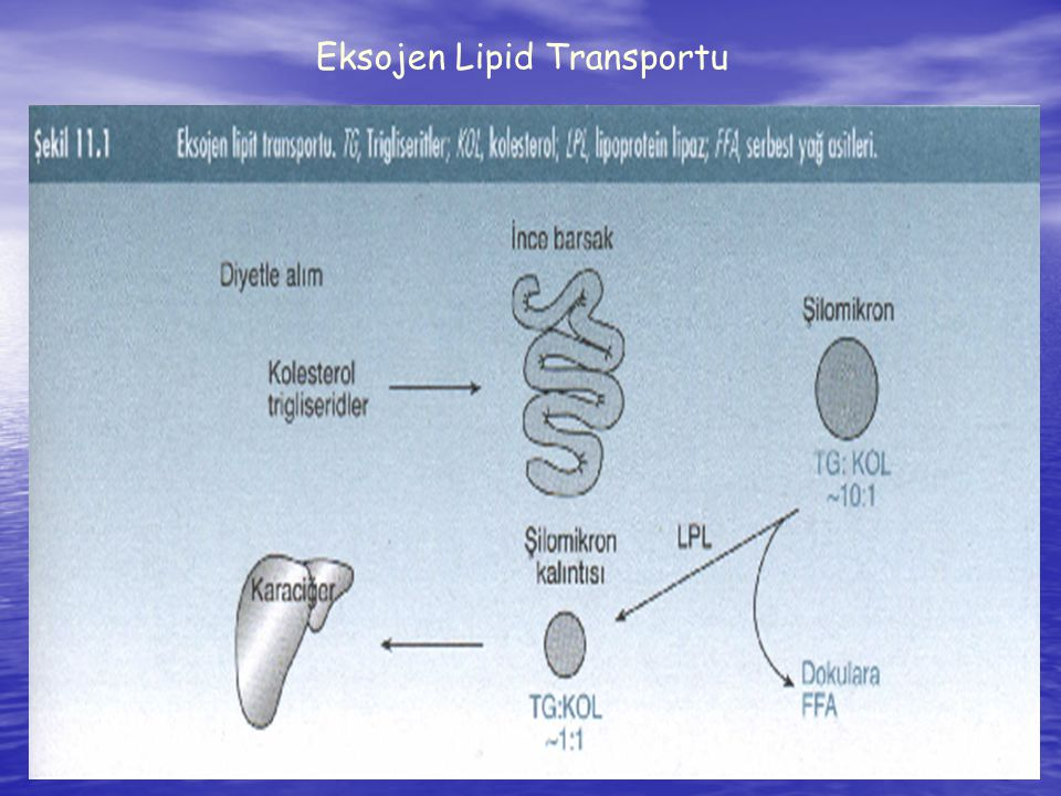 Eksojen Lipid Transportu