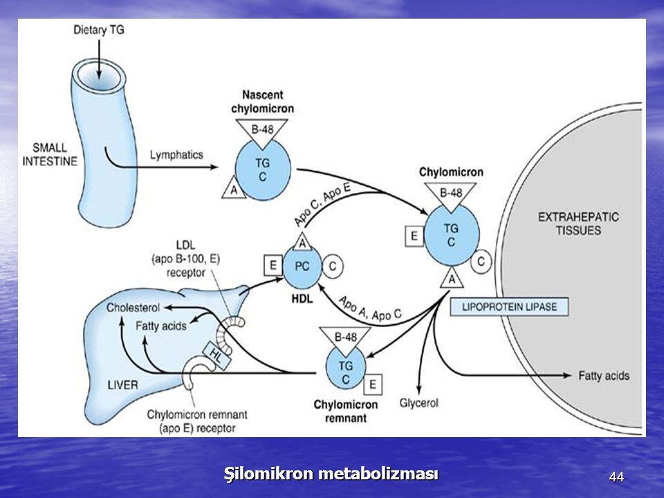 Şilomikron metabolizması