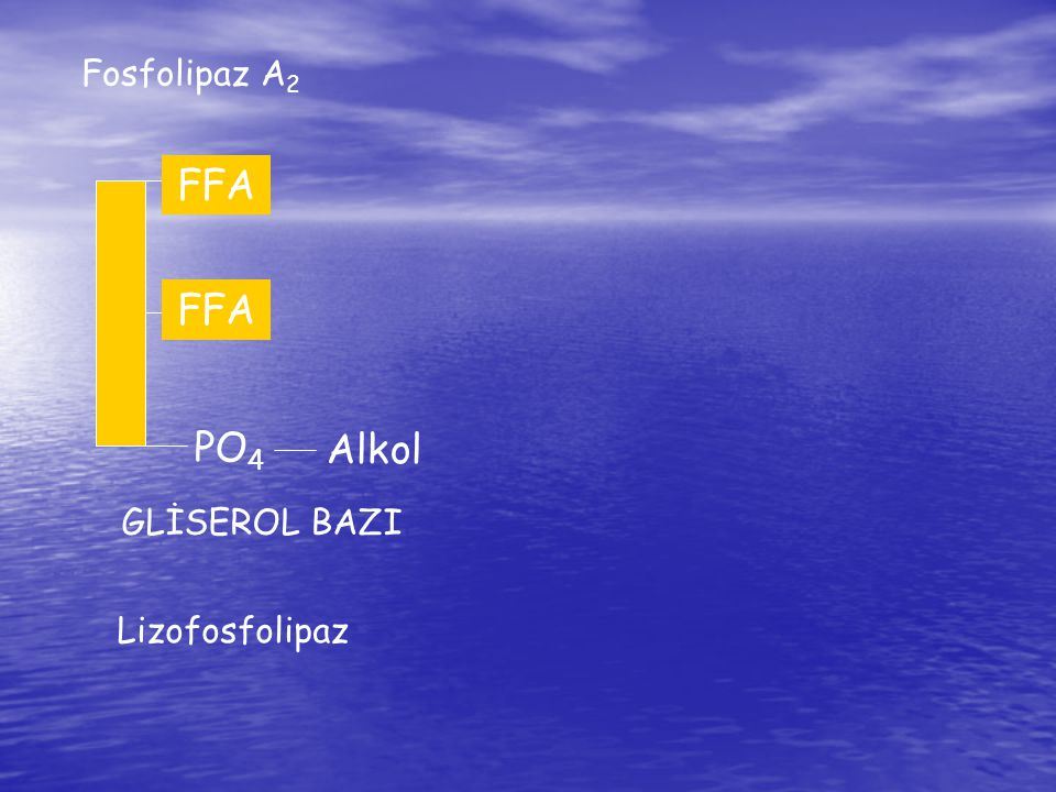 Fosfolipaz A2 FFA FA FFA FA PO4 Alkol GLİSEROL BAZI Lizofosfolipaz