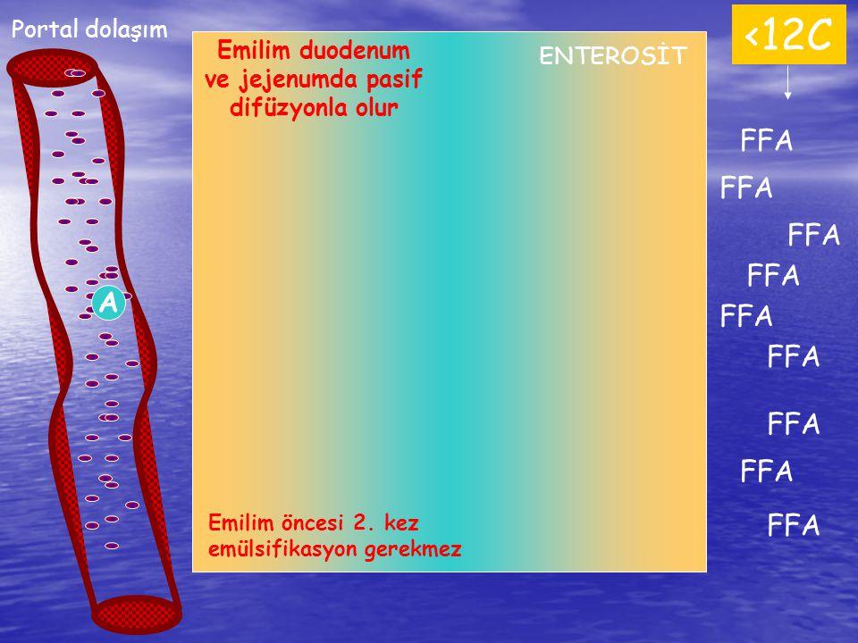 Emilim duodenum ve jejenumda pasif difüzyonla olur