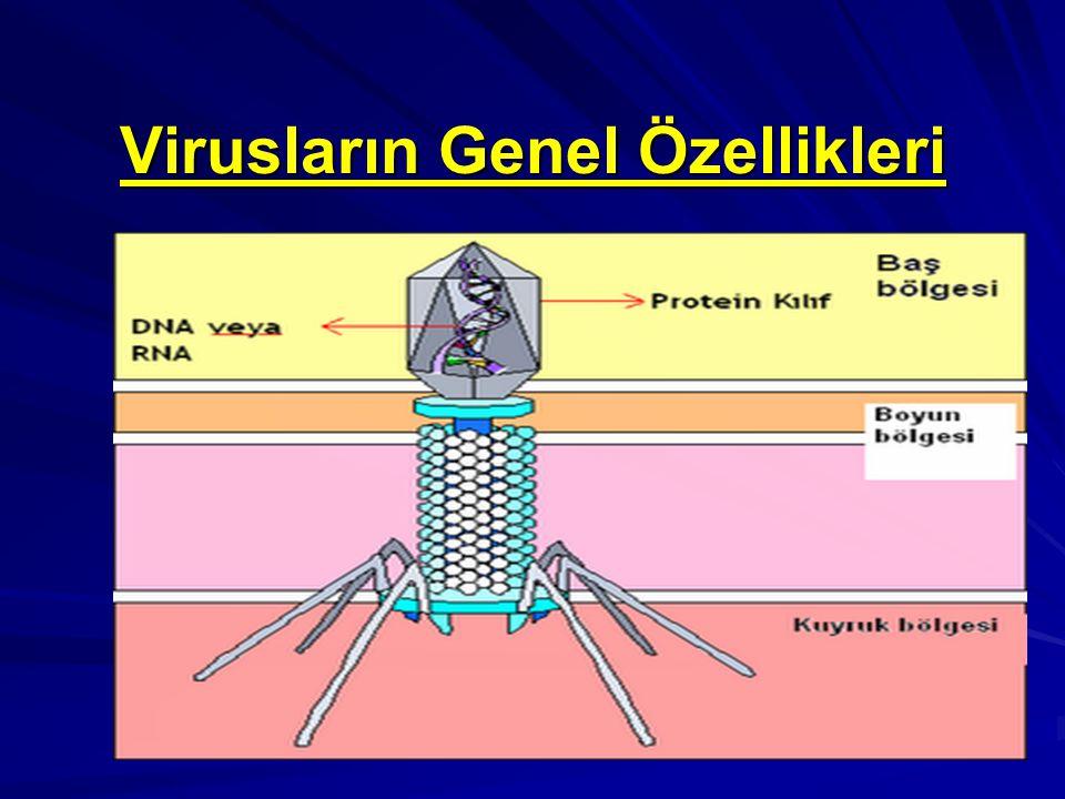 Virusların Genel Özellikleri