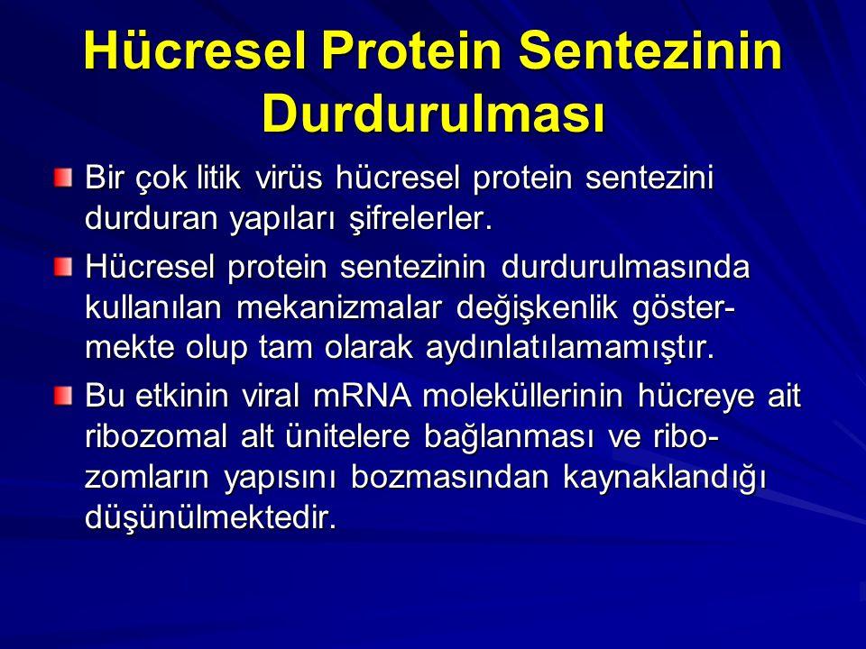 Hücresel Protein Sentezinin Durdurulması