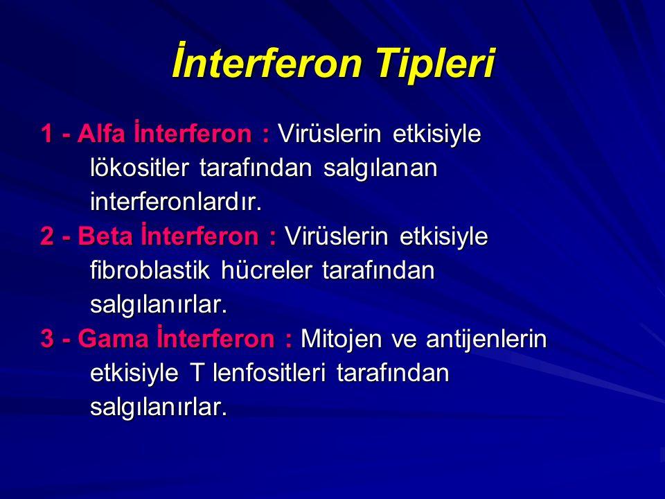 İnterferon Tipleri 1 - Alfa İnterferon : Virüslerin etkisiyle