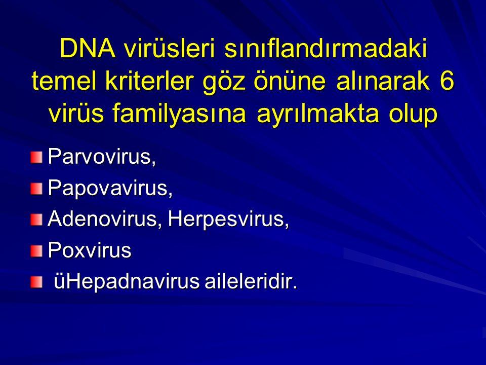 DNA virüsleri sınıflandırmadaki temel kriterler göz önüne alınarak 6 virüs familyasına ayrılmakta olup