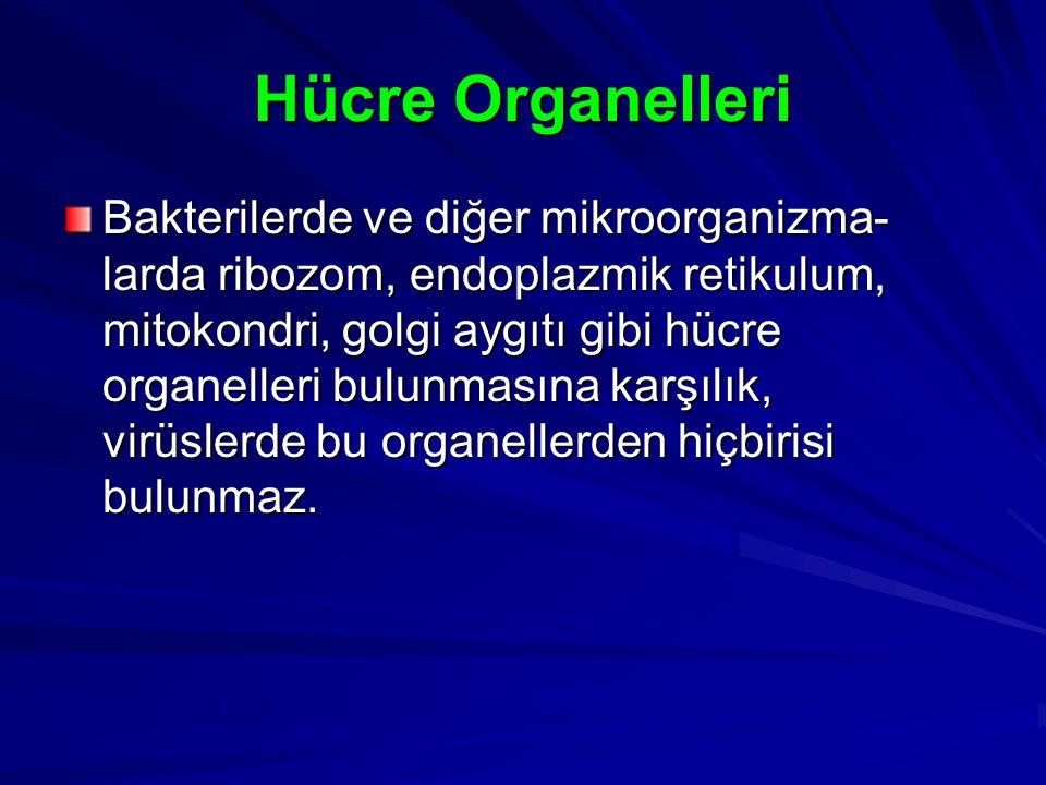 Hücre Organelleri