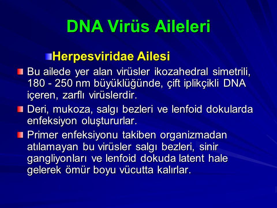 DNA Virüs Aileleri Herpesviridae Ailesi