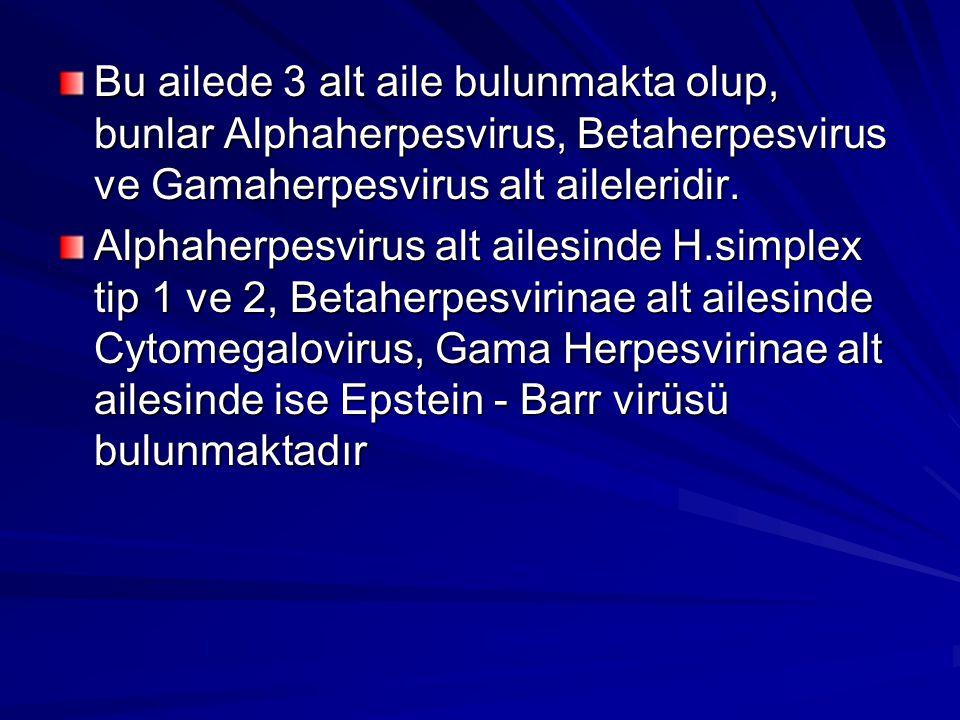 Bu ailede 3 alt aile bulunmakta olup, bunlar Alphaherpesvirus, Betaherpesvirus ve Gamaherpesvirus alt aileleridir.