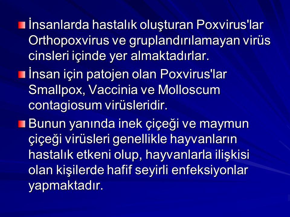 İnsanlarda hastalık oluşturan Poxvirus lar Orthopoxvirus ve gruplandırılamayan virüs cinsleri içinde yer almaktadırlar.