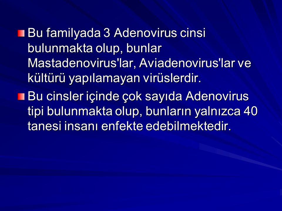 Bu familyada 3 Adenovirus cinsi bulunmakta olup, bunlar Mastadenovirus lar, Aviadenovirus lar ve kültürü yapılamayan virüslerdir.