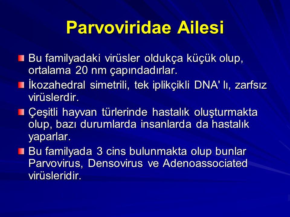 Parvoviridae Ailesi Bu familyadaki virüsler oldukça küçük olup, ortalama 20 nm çapındadırlar.